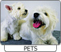 Browse the Pets & Animals Category
