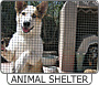 View Animal Shelters details