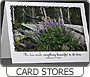 Greeting Card Stores database